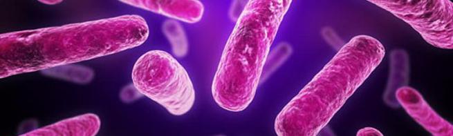 baktérium nagy.jpg
